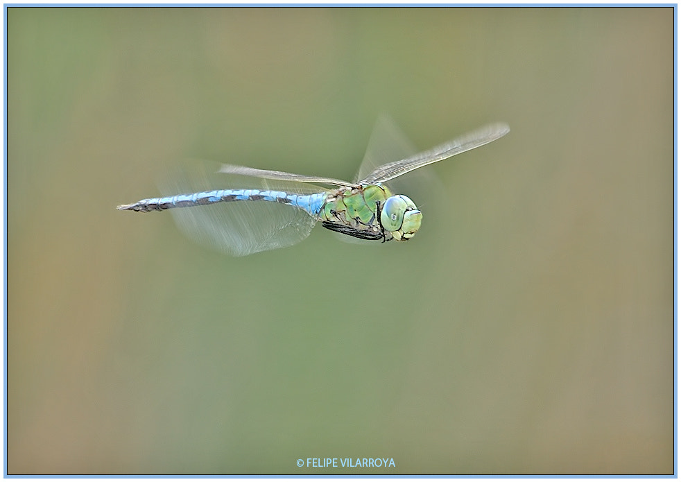 Photograph Blue and green thunder by Felipe  vilarroya on 500px