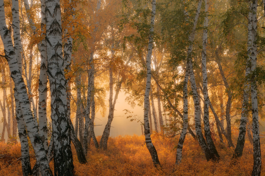 Tales of autumn by Marat Akhmetvaleev on 500px.com