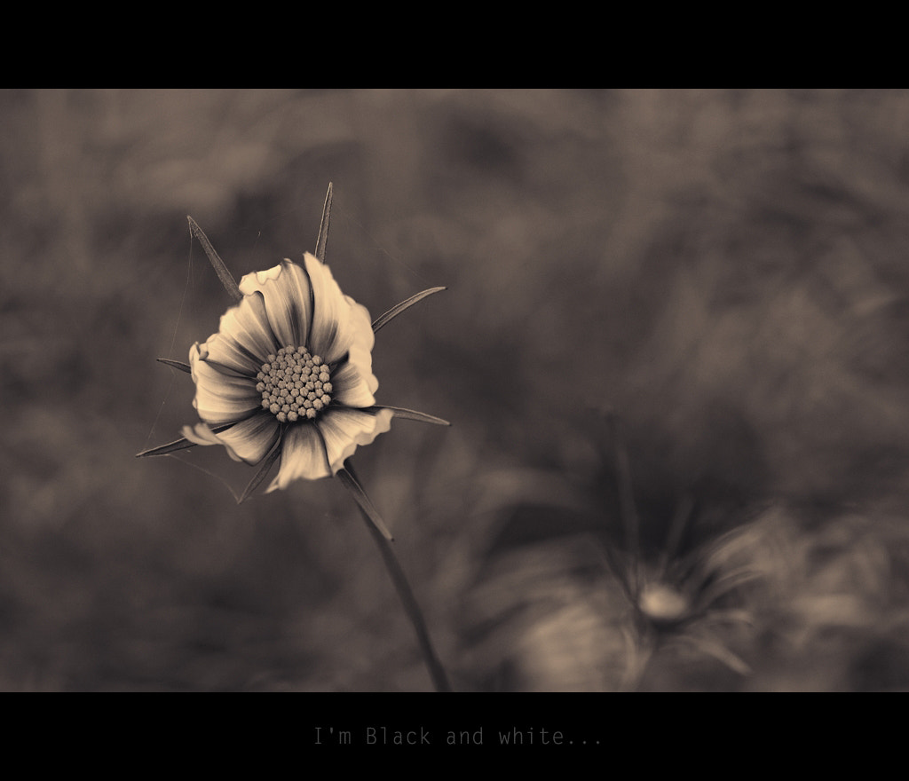 Photograph I'm Black and white... by Almqvist Photo on 500px