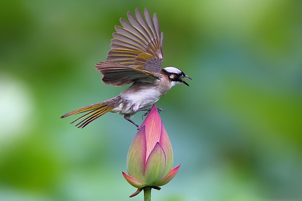 Photograph STAND ON THE LOTUS by Dajan Chiou on 500px