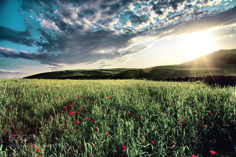 Photograph evening sun by Zamin Jafarov on 500px