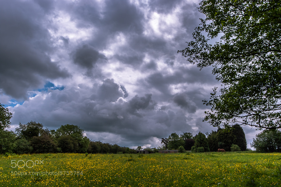 Photograph English Summer by Dave Gregory on 500px