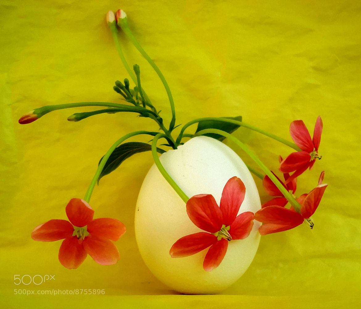 Photograph A Different Kind Of Vase by Premkumar Antony on 500px