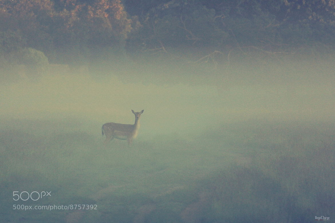 Photograph misty encounter by Hegel Jorge on 500px
