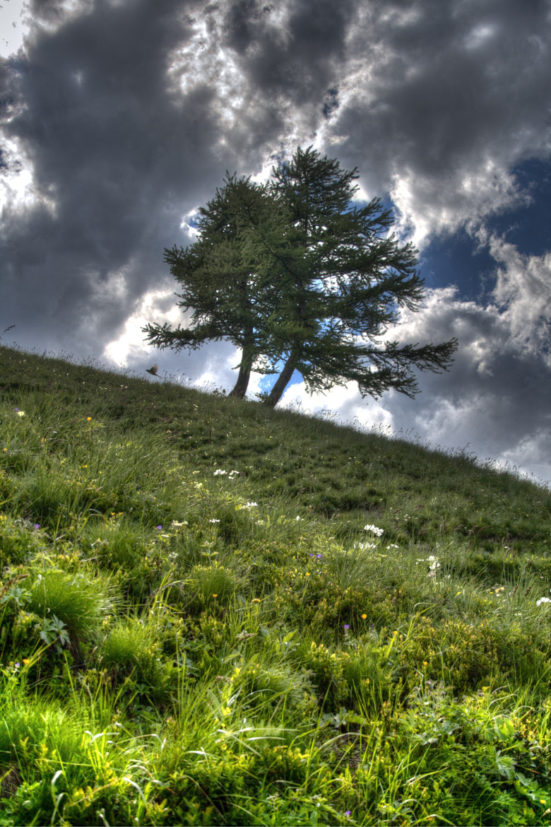 Photograph mountain trees by Marco Falcone on 500px