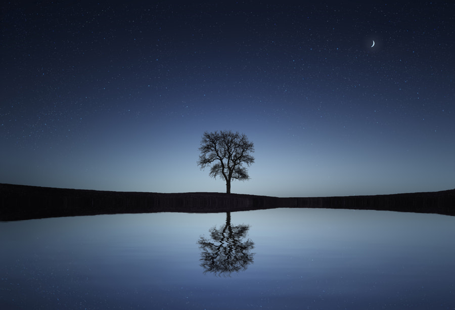 Reflection Tree by Bess Hamiti on 500px.com