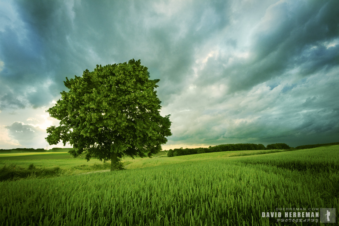 Photograph Lonely Tree by David Herreman on 500px