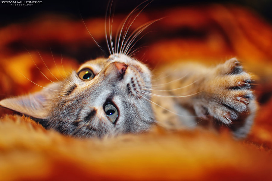 Photograph Awakening pt.1. by Zoran Milutinovic on 500px