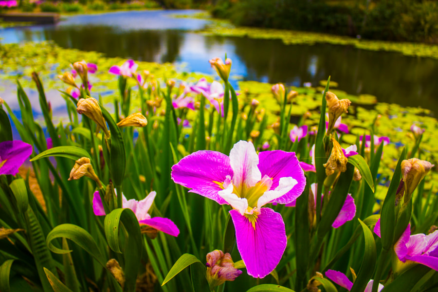 Photograph Flowers by the pond by PHOTOHAPPY on 500px