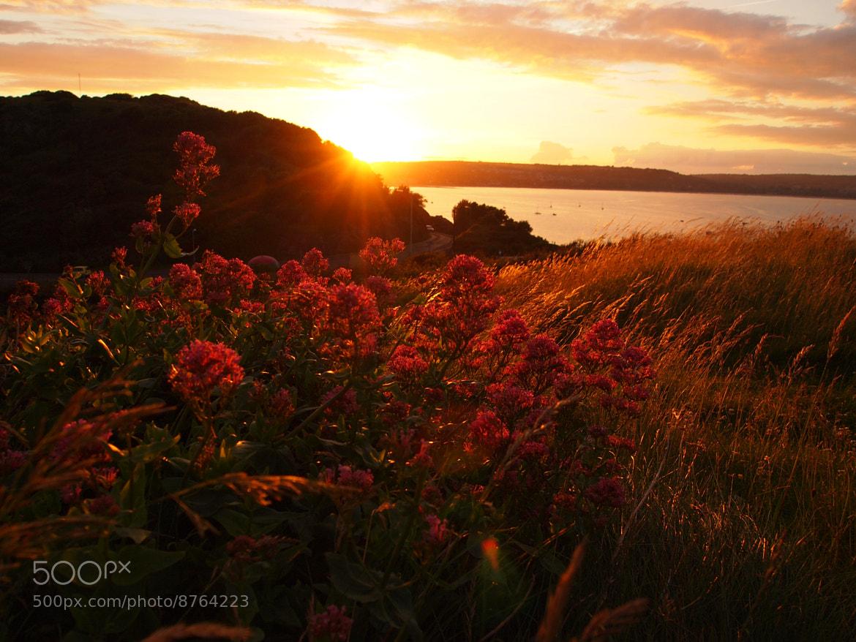 Photograph Sunset2 by Nicola Jones on 500px