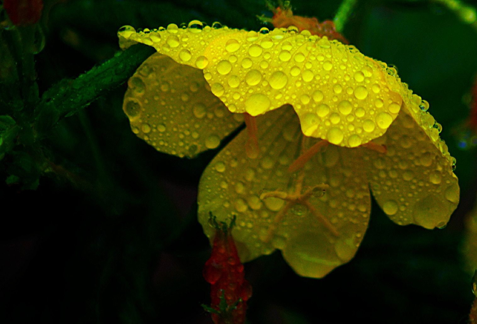 Photograph Natural Umbrella by Michael Cohen on 500px