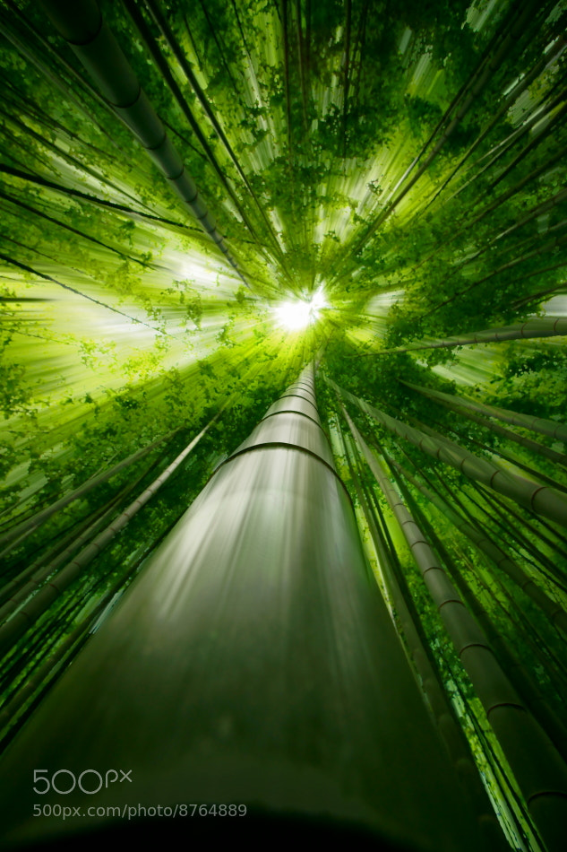 Photograph Dive to Green by Takeshi Marumoto on 500px