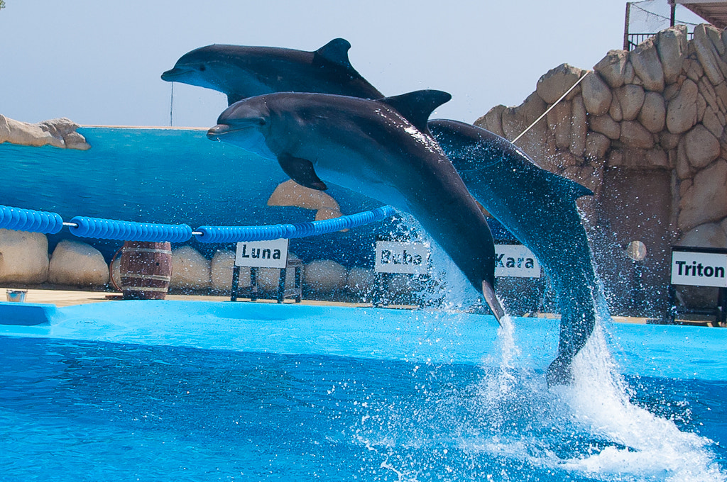 Photograph dolphins can fly 5 by Przeeemo83 NikoN on 500px