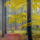 Bavarian forest, oct 2014.