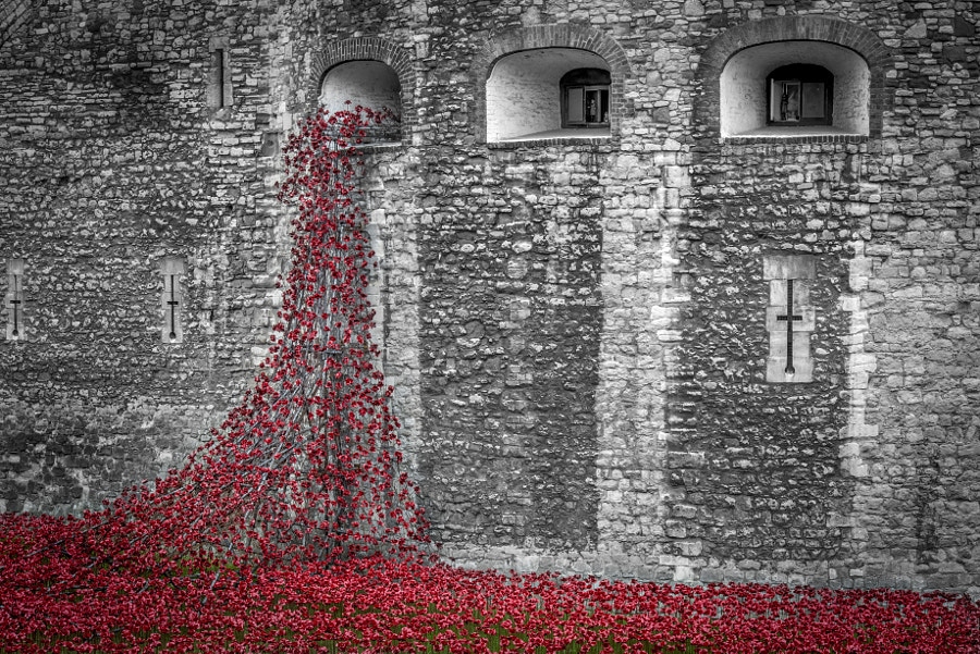 Tower of London Memorial to World War 1 by Ian Howard on 500px.com