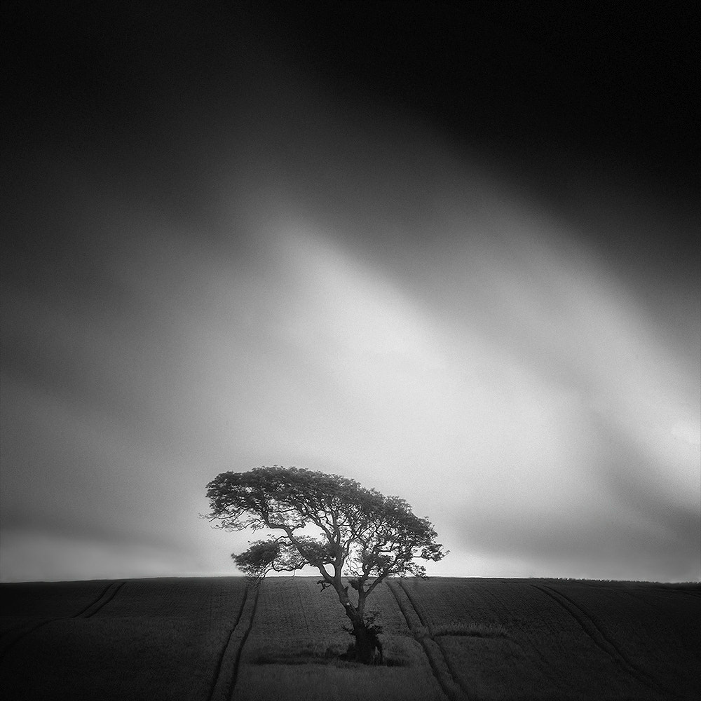Photograph ѱ Tree 8 by Andy Lee on 500px