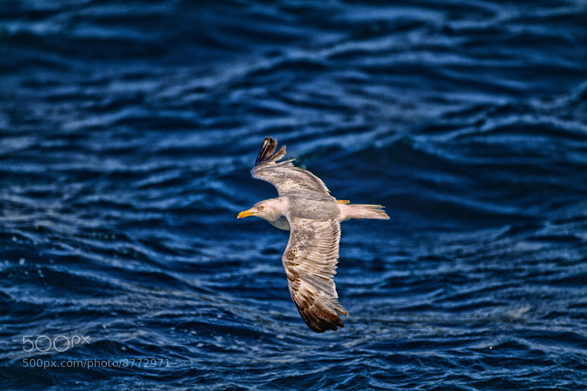 Photograph Fly with Me by Kemalettin Sert on 500px