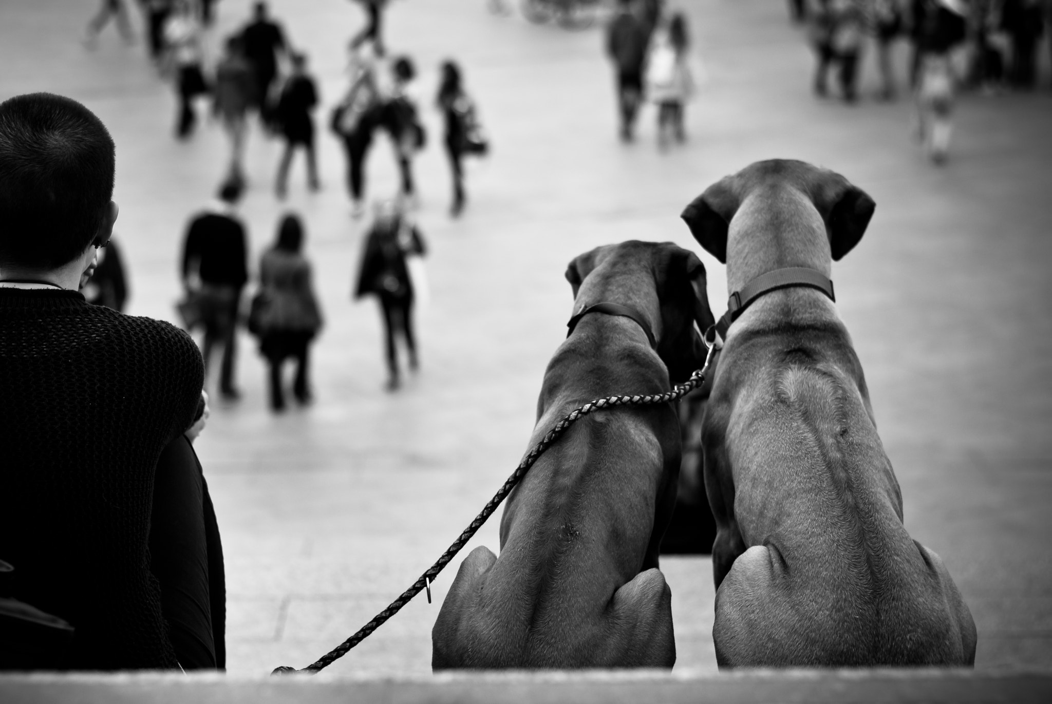 Photograph Two Dogs...One Love by Thomas Szynkiewicz on 500px