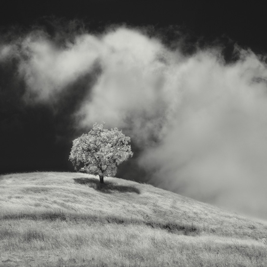 Photograph tree & clouds by Nathan Wirth on 500px