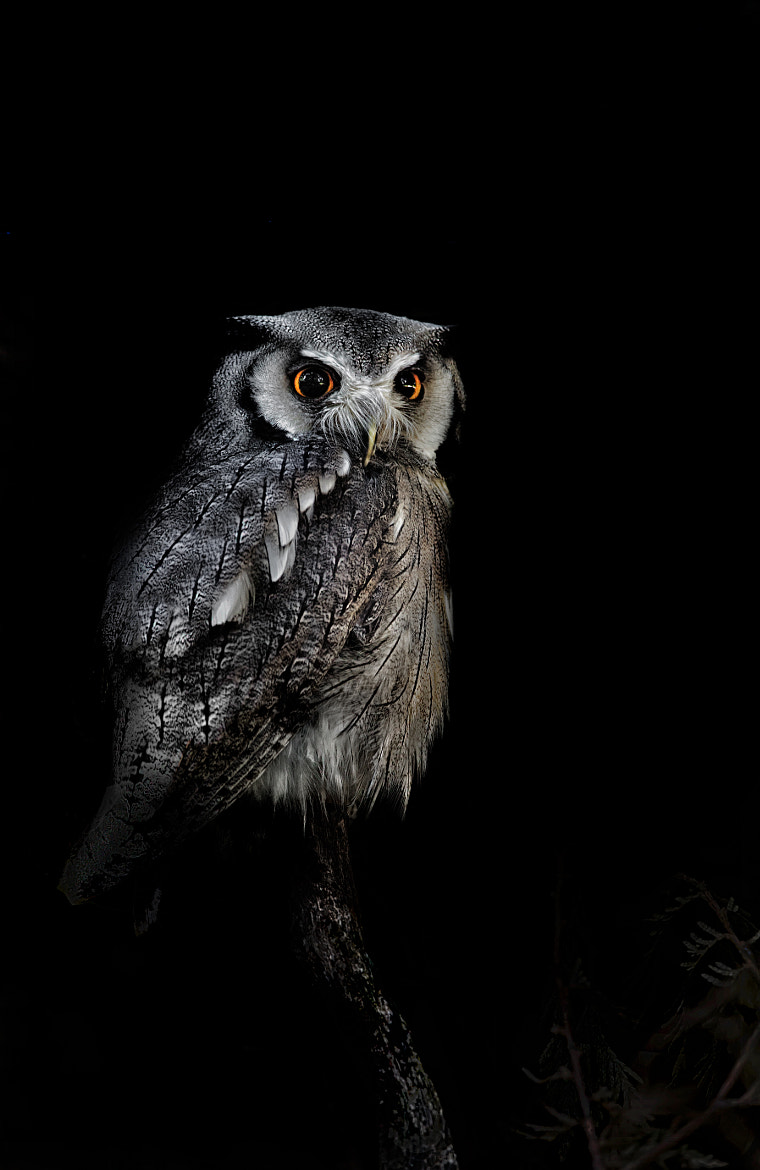 Photograph Owl! by Sue Demetriou on 500px