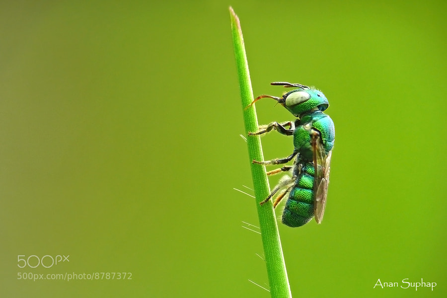 Photograph Emerald green. by Anan Suphap on 500px