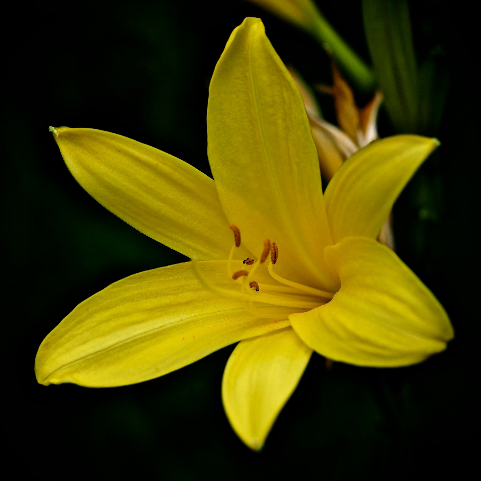Photograph Yellow by John Purchase on 500px