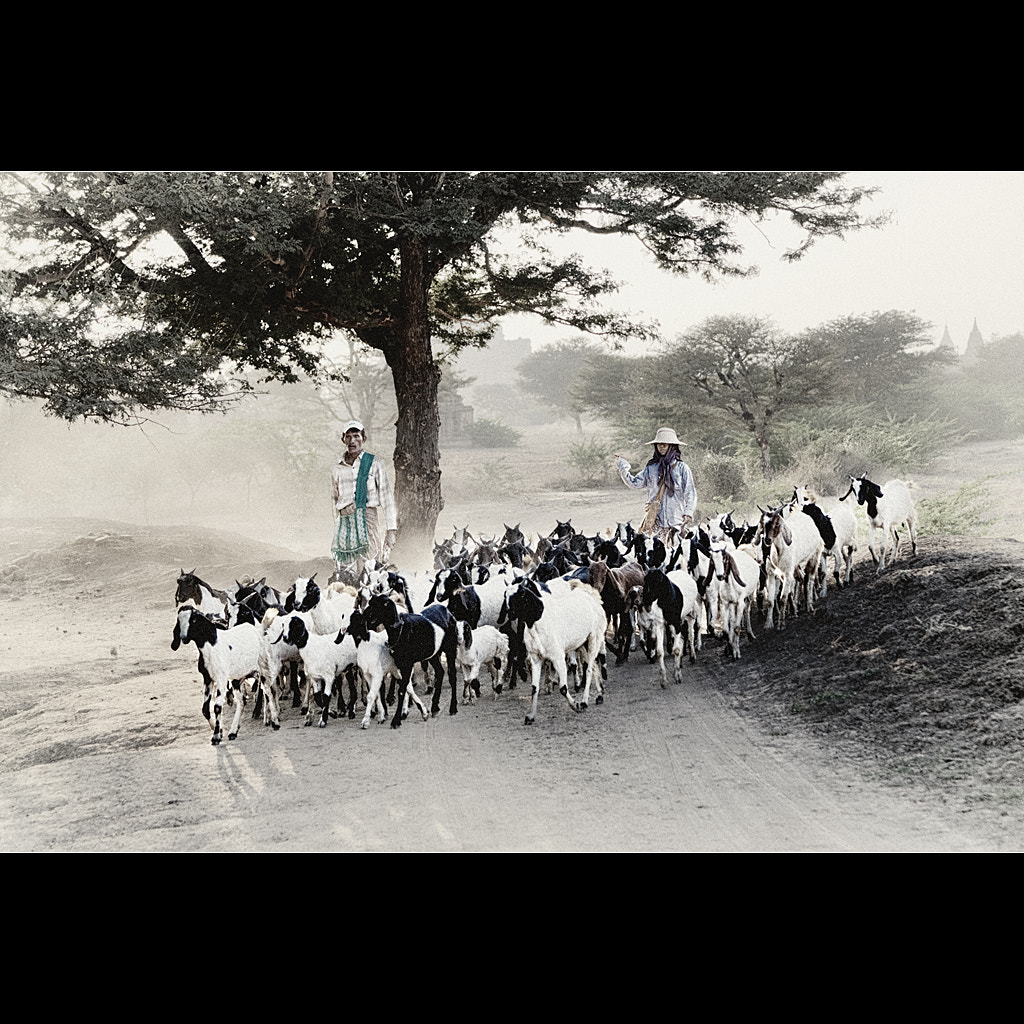 Photograph Goat herders by Malcolm Fackender on 500px