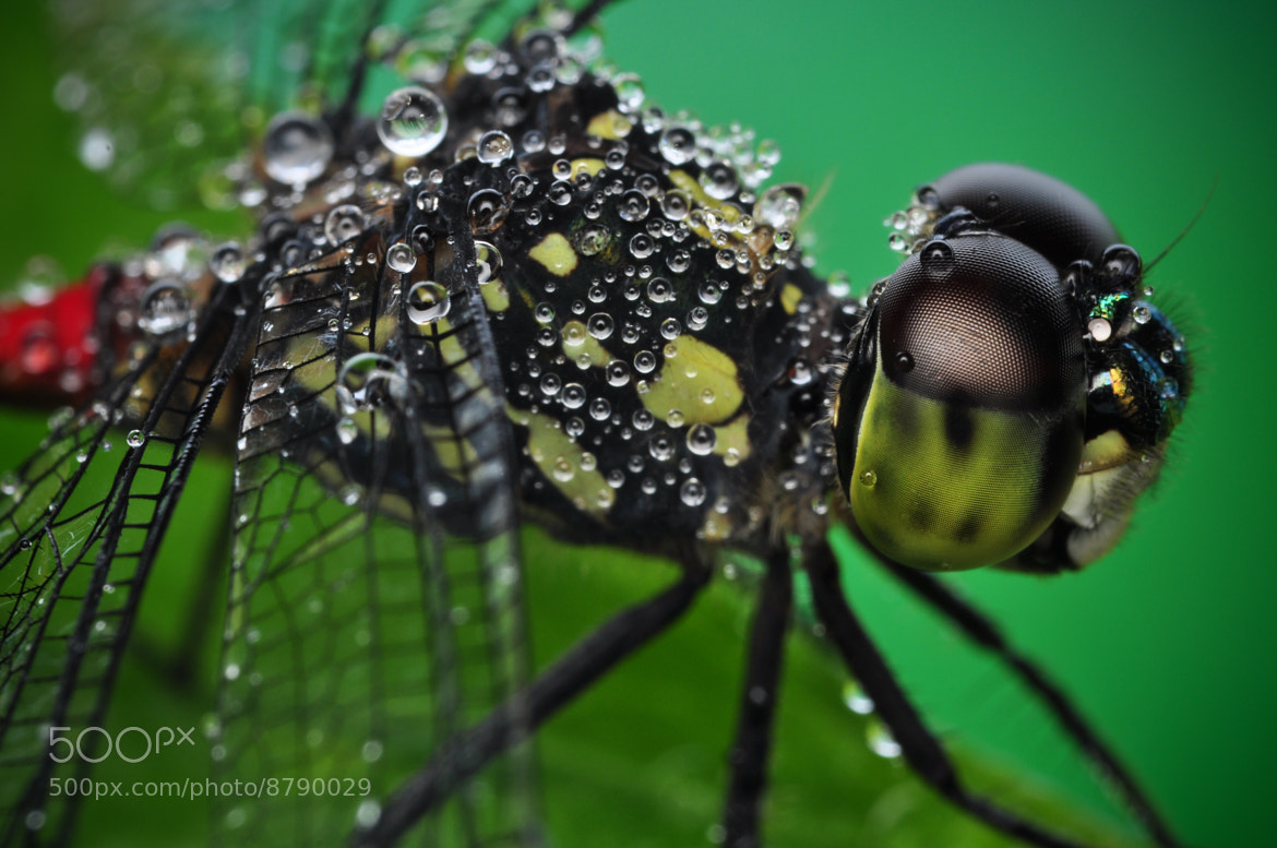 Photograph Jewels on Dragonfly by Xet Ng on 500px