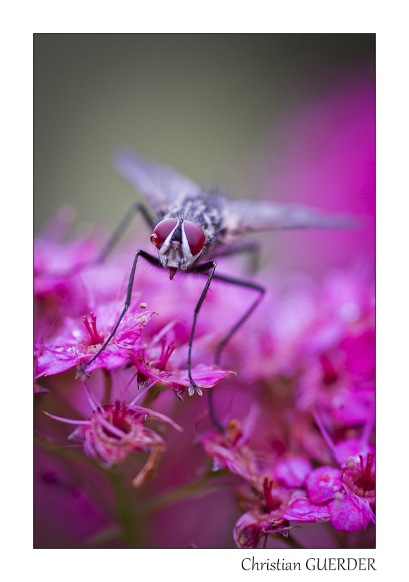 Photograph Fly by CHRISTIAN GUERDER on 500px