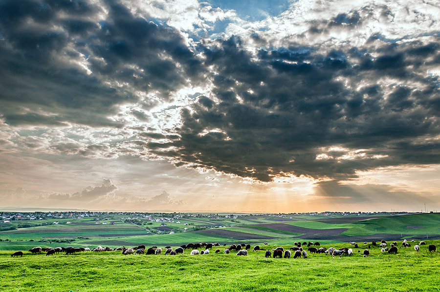Photograph Sheeps Bless by MARIAN Gabriel Constantin on 500px