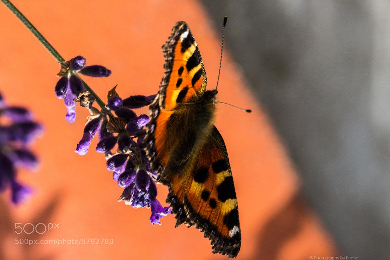 Photograph Butterflyyyy by Blendstufe Blendstufe on 500px
