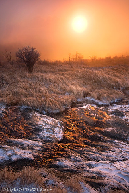 Photograph Winter Flame by Scott Hotaling on 500px