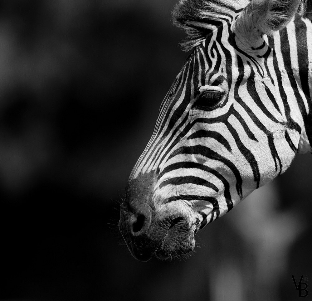Photograph Black and White  by Valentin  BLONCE on 500px