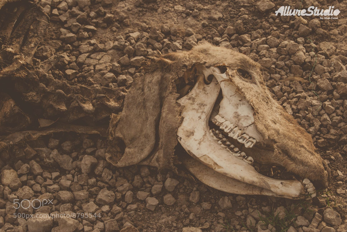 Photograph Remains by Ulises Corral on 500px