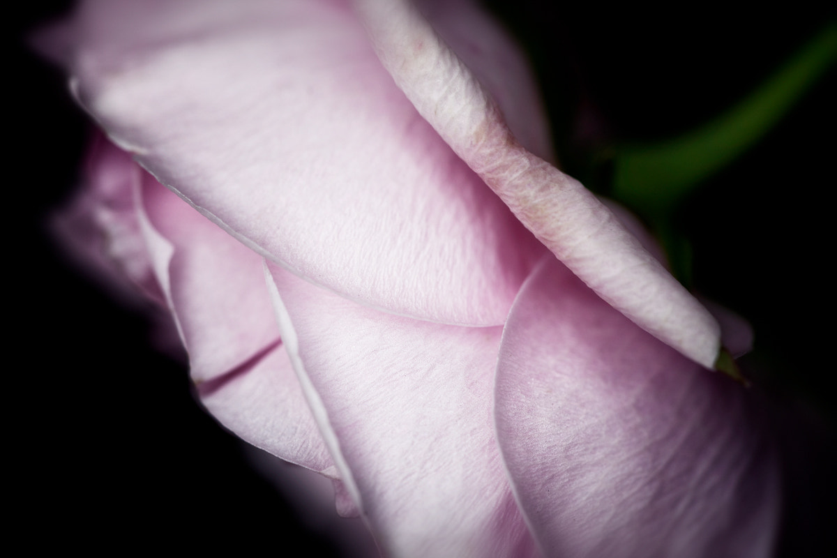 Photograph Pink by Richard Willis on 500px
