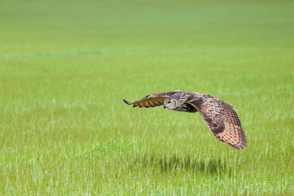 Photograph On the Hunt by Billy Currie on 500px