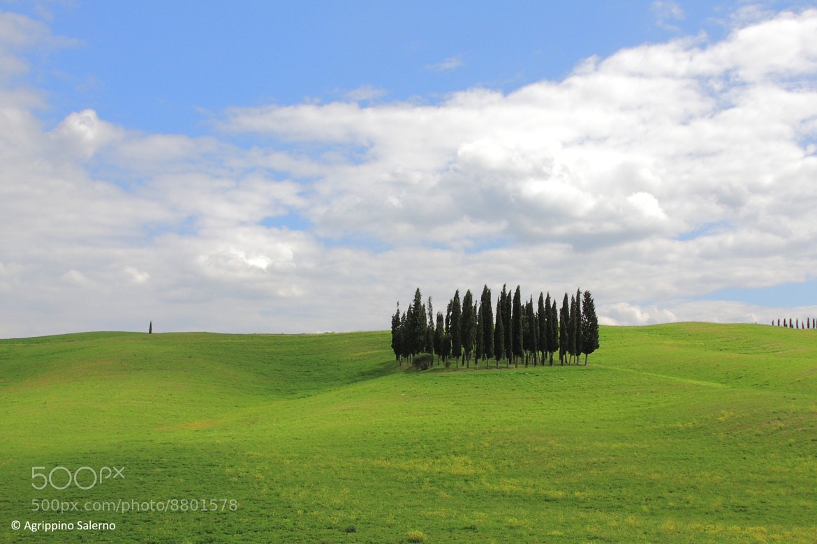 Photograph The cypress trees of S. Quirico by Agrippino Salerno on 500px