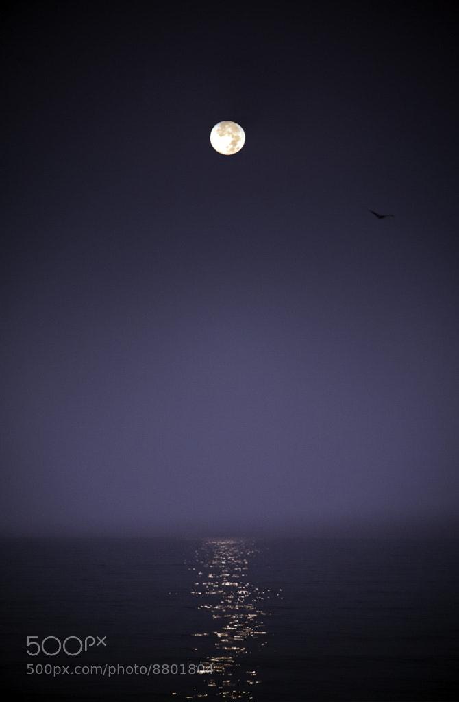 Photograph Luna by Rafael Dominguez on 500px