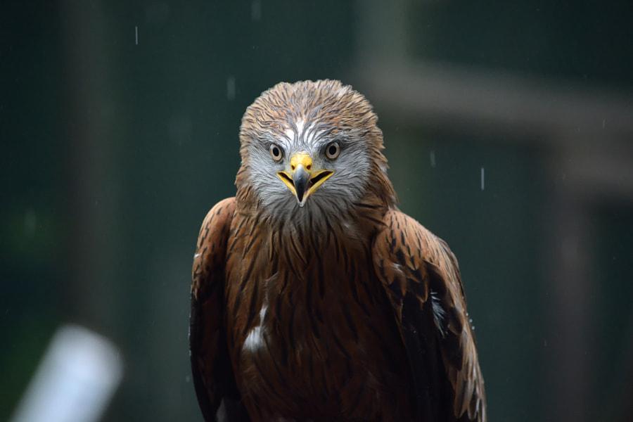 Portrait of a bird by Krystian Pawlowski on 500px.com