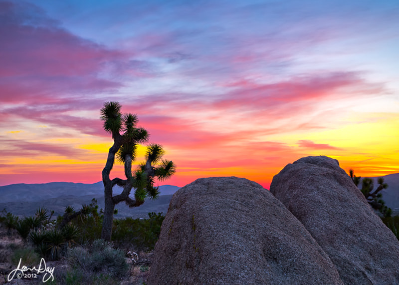 Photograph Joshua Tree Sunrise by Jean Day Photography on 500px