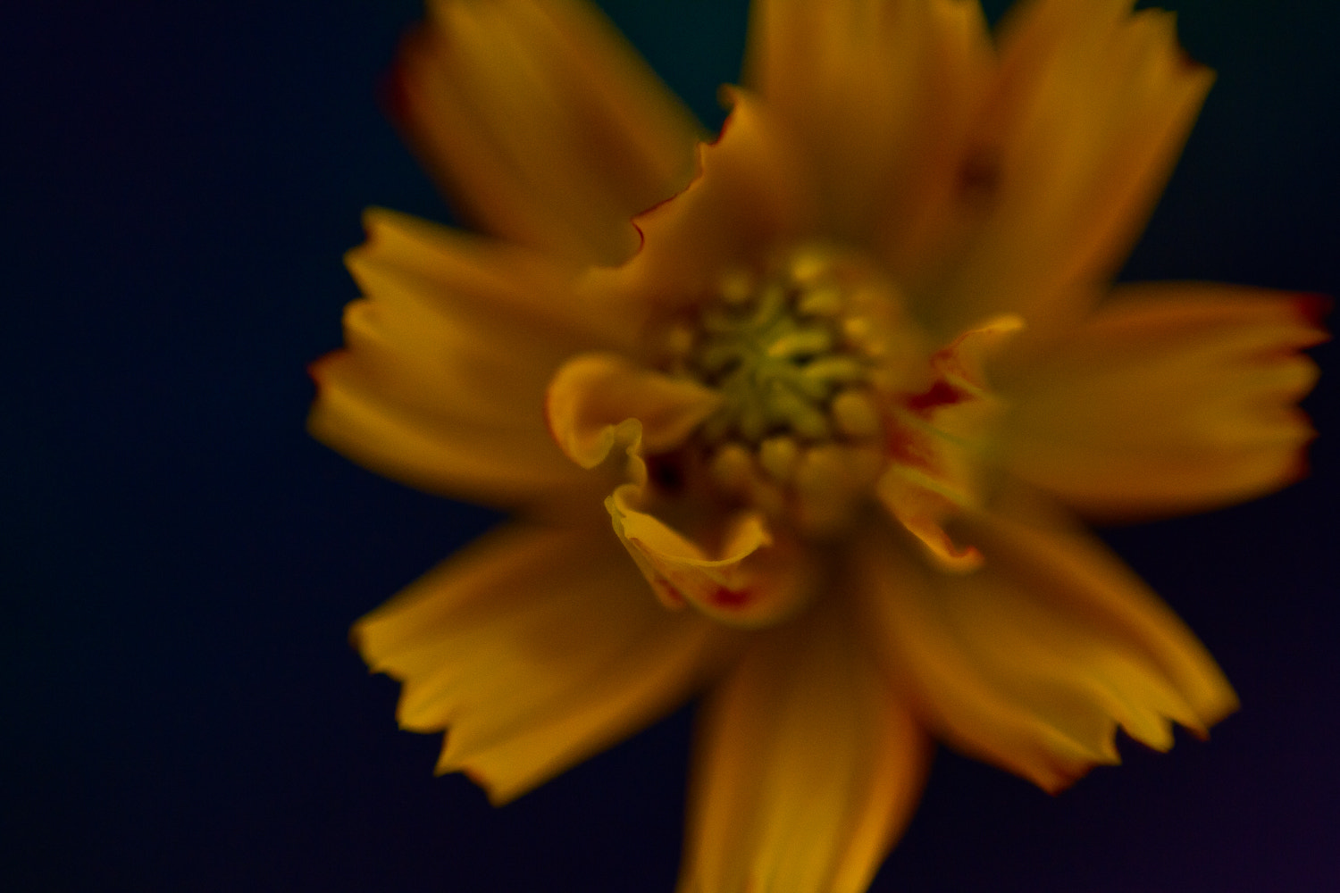 Photograph on the verge by Lotus Carroll on 500px