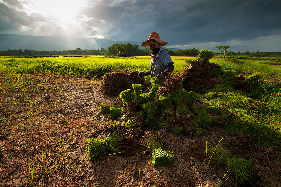 Photograph Thai farmer. by jeerasak Chaisongmuang on 500px