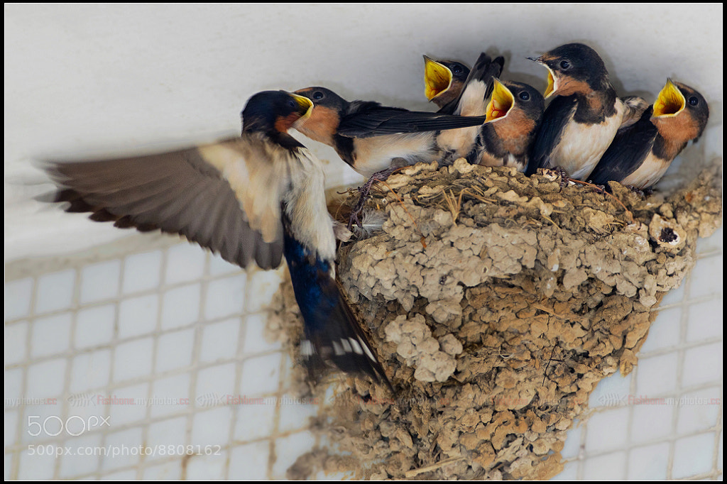 Photograph Waiting to eat by Fish Bone on 500px