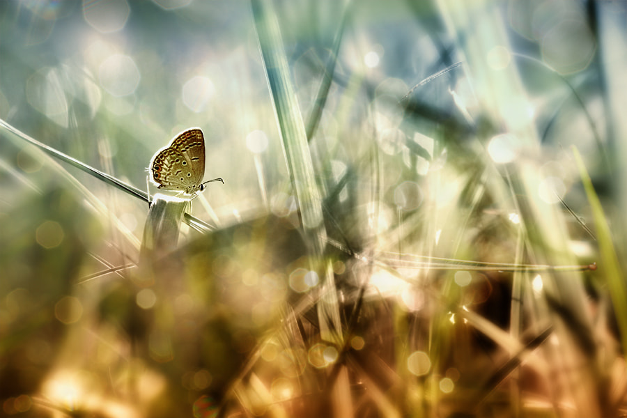 Photograph alone in the morning  by Angga Ra Putra on 500px