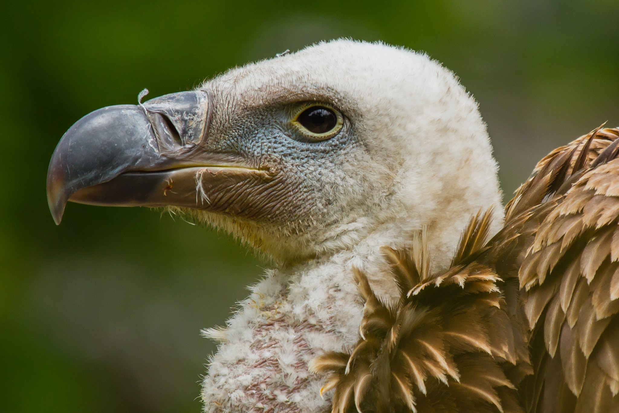 Photograph Vulture by Markus _ on 500px