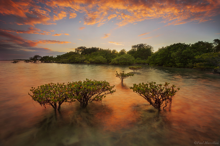 Photograph Mangrove Sunset by Paul Marcellini on 500px