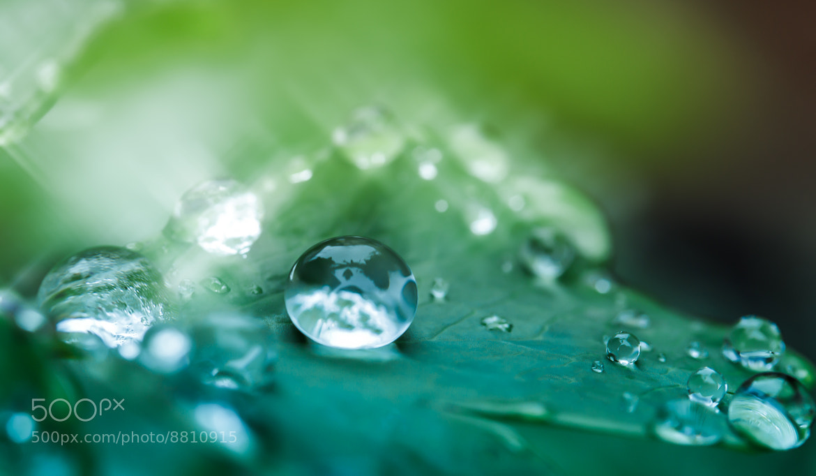Photograph Diamonds from heaven by Miki Asai on 500px