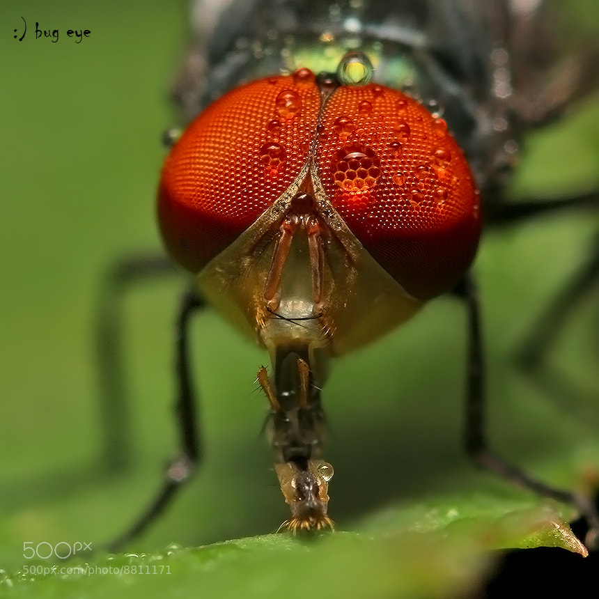 Photograph Mr.sucker by bug eye :) on 500px