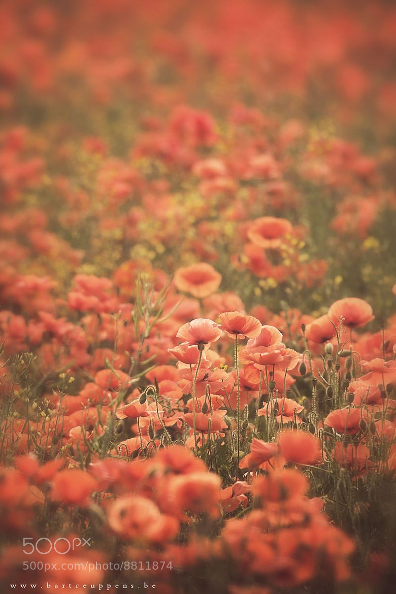 Photograph Poppy heaven by Bart Ceuppens on 500px