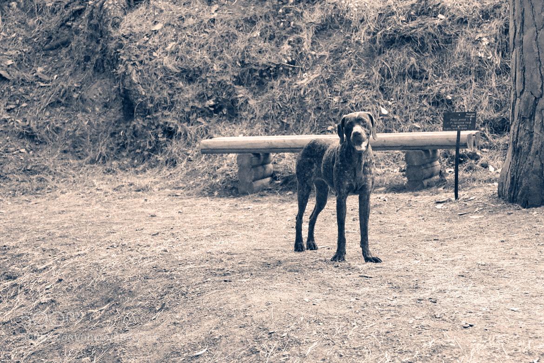 Photograph Stray Dog by Jesús Lara on 500px